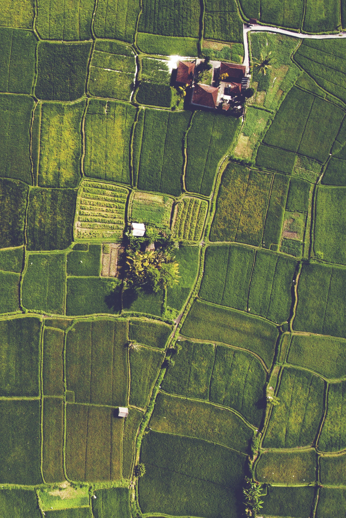 Drone shot of rice paddies